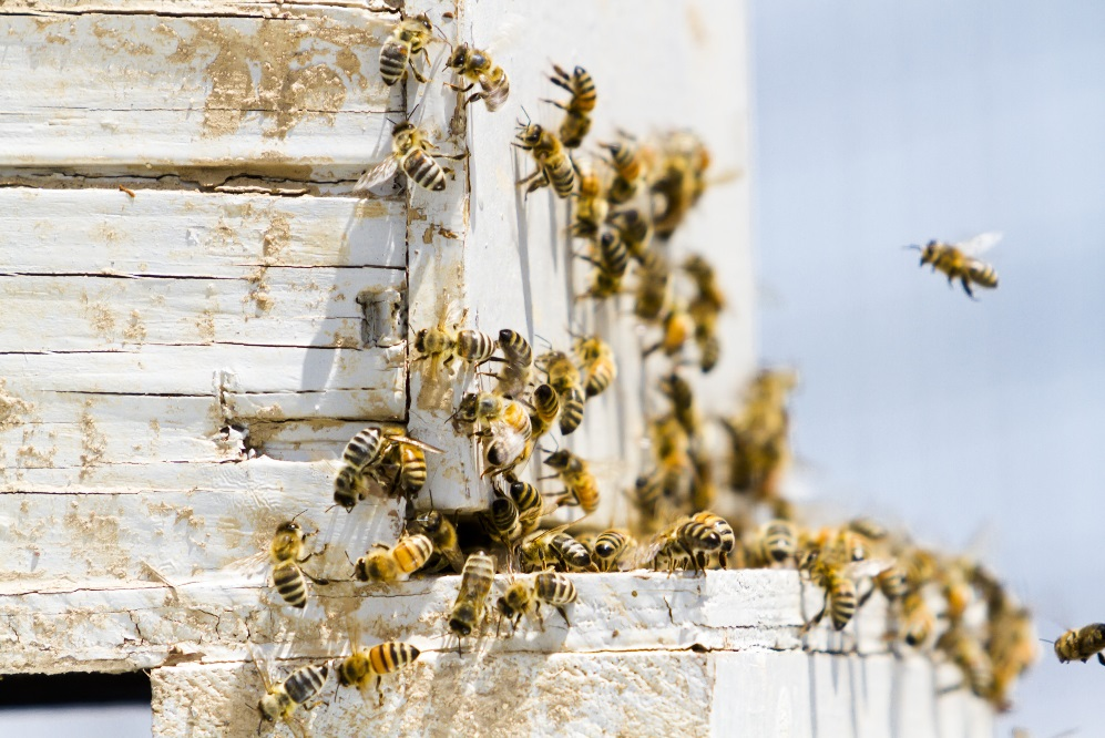 Handling a Beehive